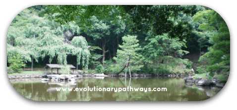 Pond In A Peaceful Rainforest Setting
