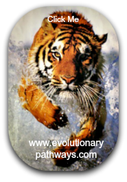 Tiger Charging